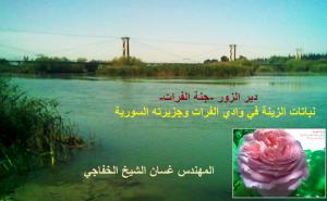 دير الزور جنة الفرات.. غسان الشيخ الخفاجي